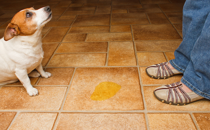 How To Prevent Damage To Tile Floors As A Pet Owner The Grout Medic - Best floor for dogs that pee